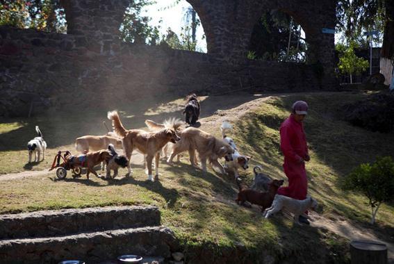 Приют для бездомных собак-инвалидов в Мехико. Фотографии