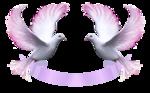 Превью Голуби_на_прозрачном_слое (19) (500x310, 169Kb)
