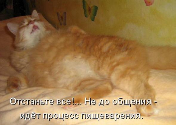 2835299_1354135329_kotomatrici_yumornie_74959 (590x421, 54Kb)