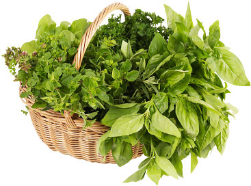 1358359948_Fresh_herbs_in_straw_basket_2 (367x272, 40Kb)