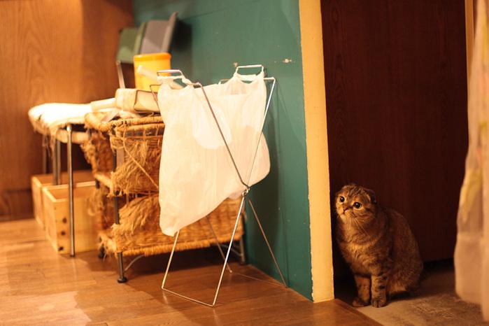 Cat cafe кошачье кафе в осаке 14 (700x466, 117Kb)