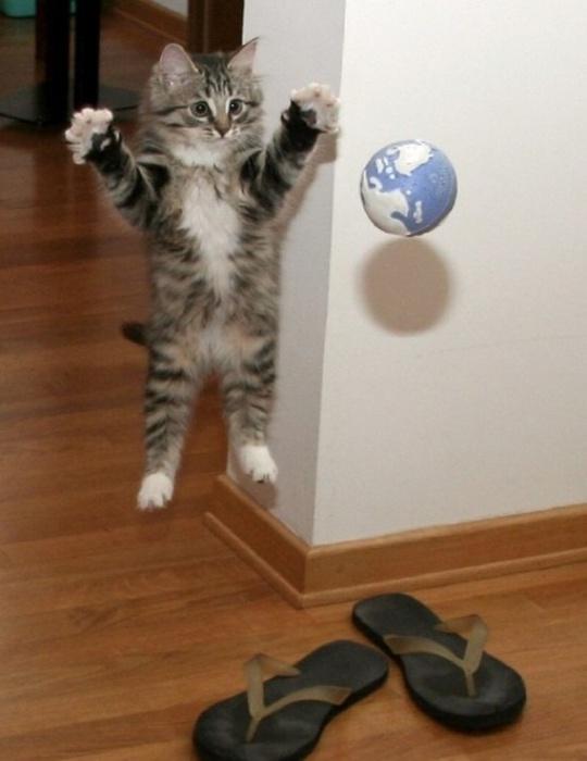 Не вывести глистов у кота