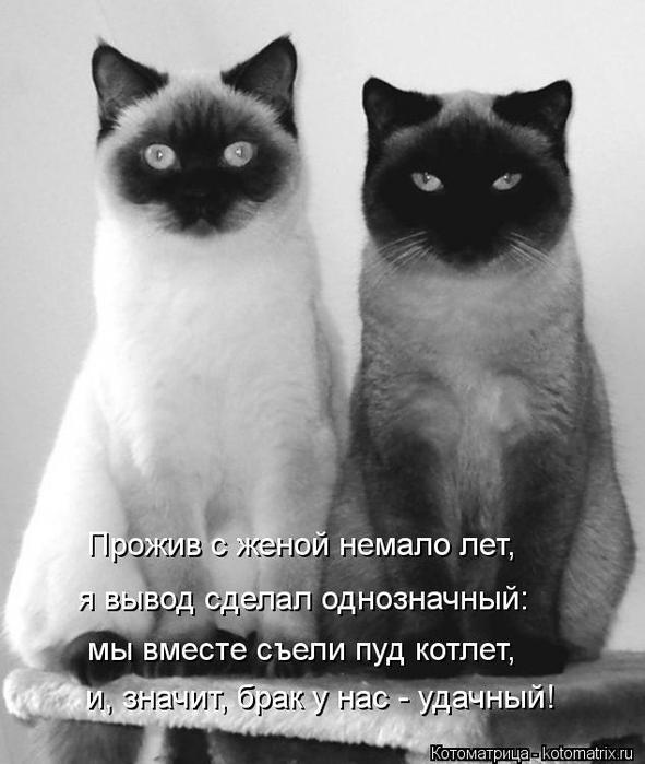 kotomatritsa_3a (591x700, 47Kb)