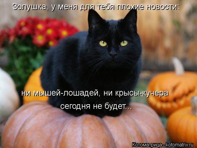 kotomatritsa_Kd (640x480, 45Kb)