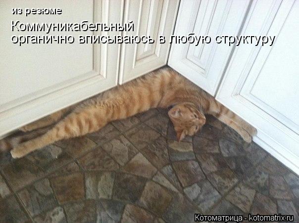 kotomatritsa_Y (604x451, 47Kb)