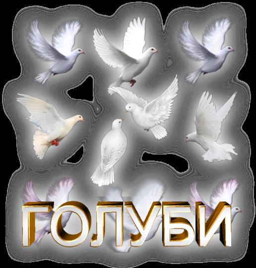 3996605_Golybi_na_prozrachnom_fone2 (516x541, 376Kb)