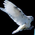 Превью Голуби (4) (147x149, 23Kb)