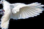 Превью Голуби (6) (150x99, 22Kb)