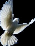 Превью Голуби (8) (117x150, 22Kb)