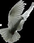 Превью Голуби (12) (117x150, 23Kb)