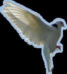 Превью Голуби (14) (134x149, 21Kb)