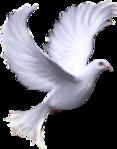 Превью Голуби (23) (117x149, 26Kb)