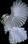 Превью Голуби (31) (95x149, 25Kb)