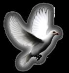 Превью Голуби (33) (141x149, 25Kb)