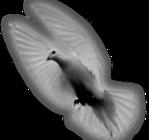 Превью Голуби (35) (149x140, 23Kb)