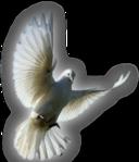 Превью Голуби (38) (128x149, 26Kb)