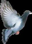 Превью Голуби (41) (110x149, 23Kb)
