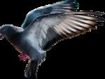 Превью Голуби (150x113, 21Kb)
