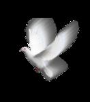 Превью Голуби_на_прозрачном_слое (54) (259x293, 46Kb)