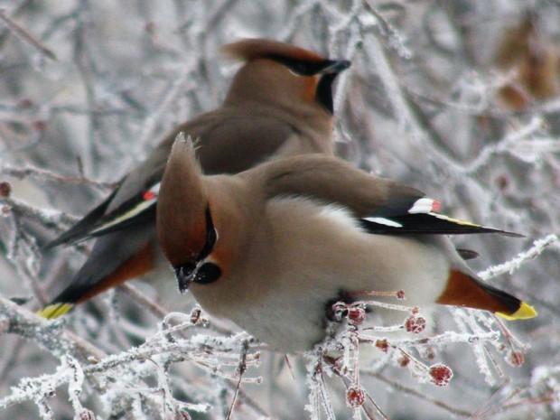 птицы1 (620x465, 72Kb)