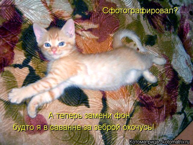 kotomatritsa_5_ (640x480, 66Kb)