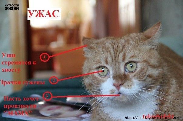 http://img0.liveinternet.ru/images/attach/c/7/96/380/96380290_large_dQDZcThinvY.jpg