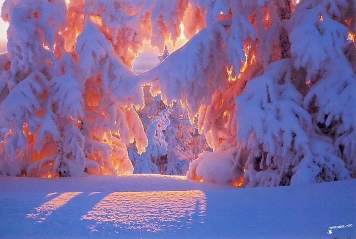 TUT.BY ФОТО ТУТ - зима