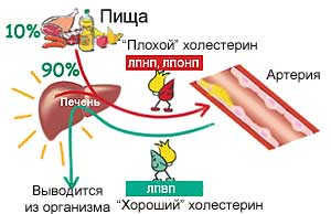 лпонп холестерин повышены что это значит
