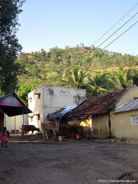 Индия, Тируваннамалай, 2012, 67 (480x640, 282Kb)