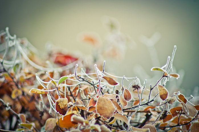 1358635639_early_winter_by_nevletlenlulud4mvd8a (699x466, 84Kb)