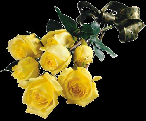 Розы жёлтые1 (500x416, 231Kb)