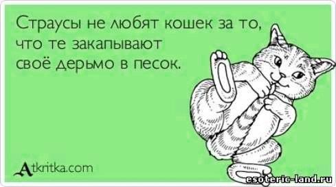 юмор и приколы (489x273, 28Kb)