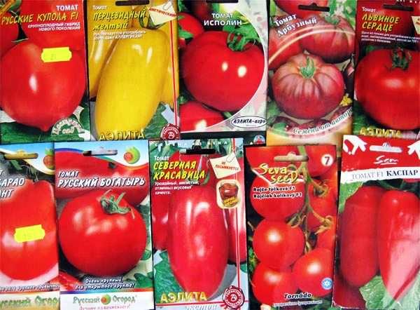 semena-pomidor (600x442, 45Kb)