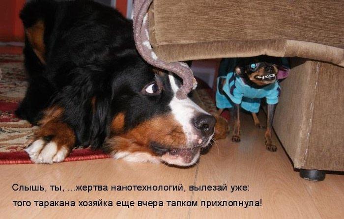 http://img0.liveinternet.ru/images/attach/c/7/96/502/96502042_large_356.jpg