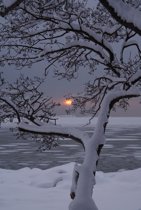 снег3 (468x700, 146Kb)