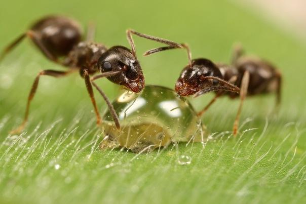 муравьи1 (604x403, 59Kb)