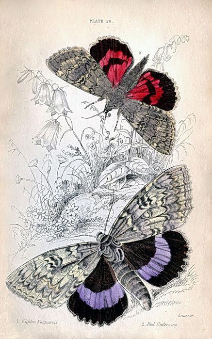 ButterflieVINTAGE (437x700, 159Kb)
