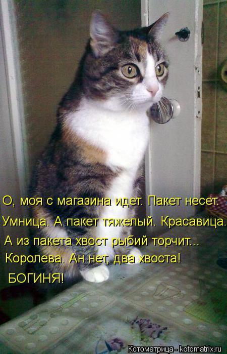 kotomatritsa_8 (450x700, 57Kb)