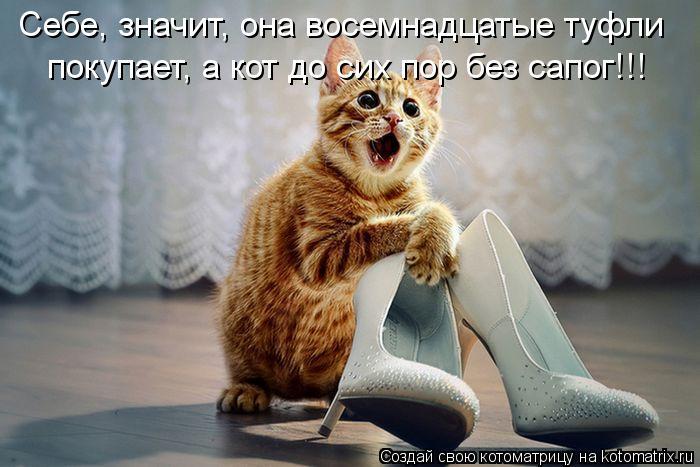 kotomatritsa_Jk (700x467, 55Kb)