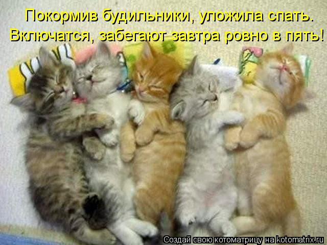 kotomatritsa_oE (640x480, 54Kb)