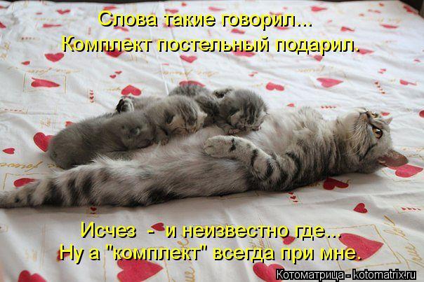 kotomatritsa_Wq (604x403, 57Kb)