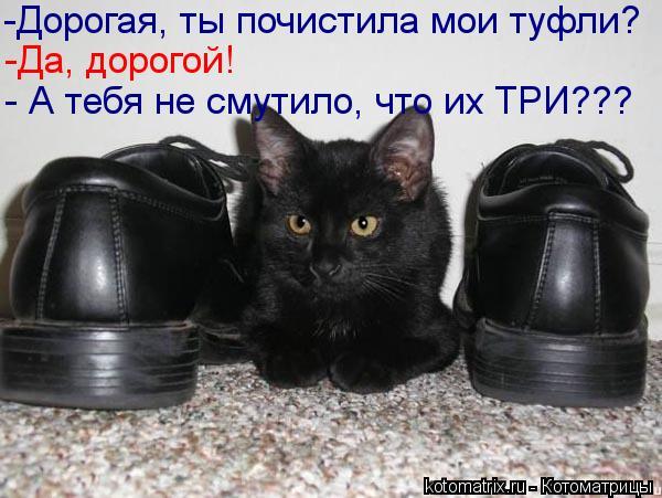 kotomatritsa_z5 (600x451, 50Kb)