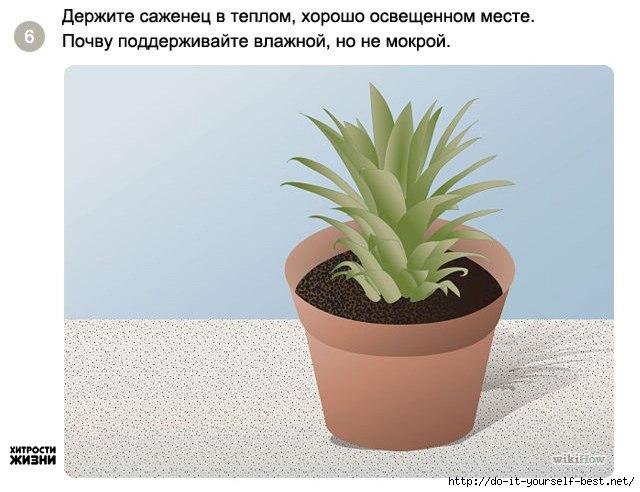 Комнатное цветоводство 96616692_large_6