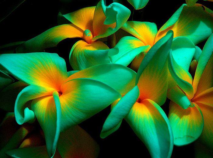 Смотреть порно kya tropik anal 22 фотография