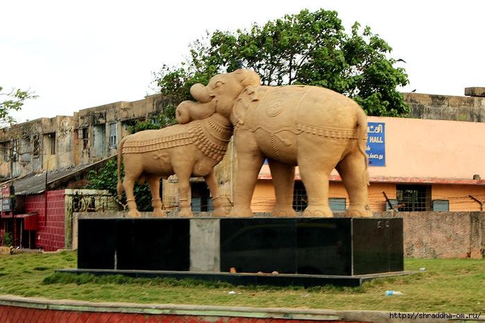 Телец и Слон в Ченнае, Индия (700x466, 249Kb)
