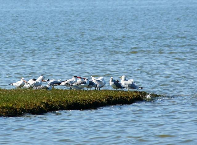 seagulls-60159_640 (640x471, 100Kb)