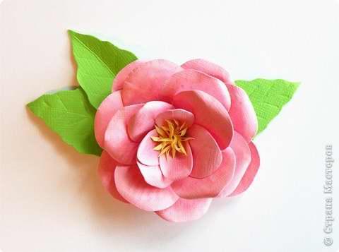 цветка на цветную бумагу и
