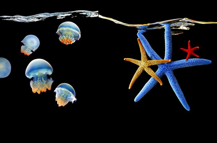 красивых и изящных медуз,