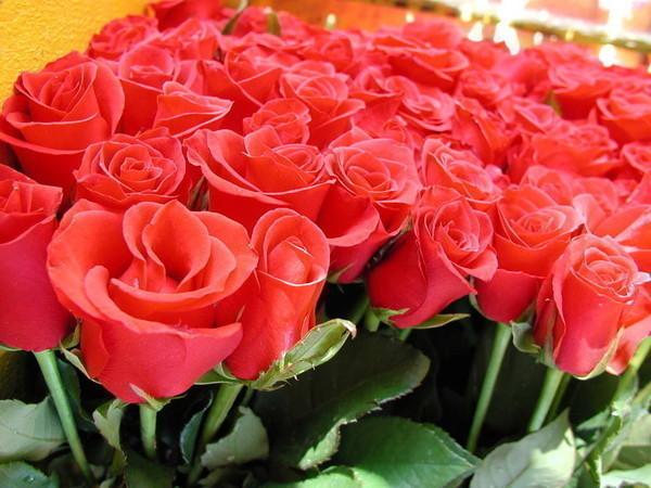 Открытка с розами скачать бесплатно