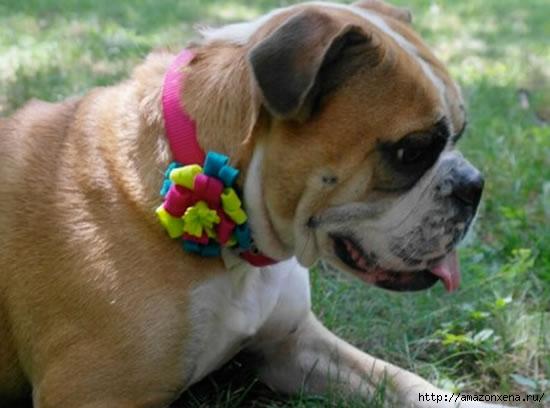 coleira-decorada-para-cachorro-8 (550x408, 109Kb)